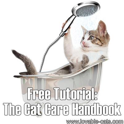 free cat tutorial # 19