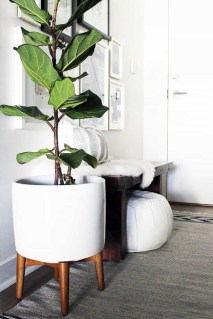 Popular Indoor Plant Stands Ideas For Fresh Home Inspiration 10