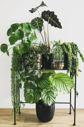Popular Indoor Plant Stands Ideas For Fresh Home Inspiration 15