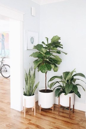 Popular Indoor Plant Stands Ideas For Fresh Home Inspiration 35