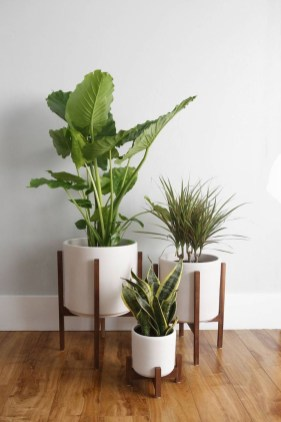 Popular Indoor Plant Stands Ideas For Fresh Home Inspiration 45