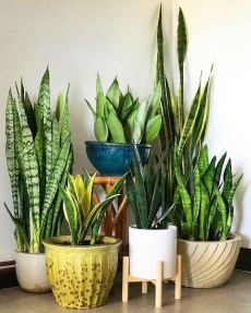 Popular Indoor Plant Stands Ideas For Fresh Home Inspiration 48