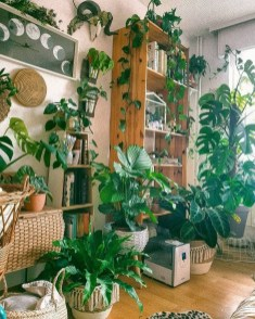 Affordable House Plants For Living Room Decoration 03