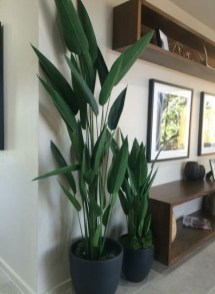 Affordable House Plants For Living Room Decoration 05
