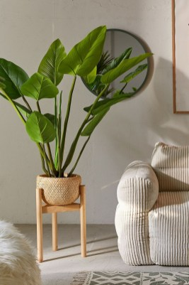 Affordable House Plants For Living Room Decoration 08