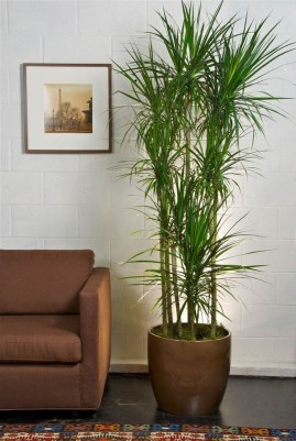 Affordable House Plants For Living Room Decoration 09