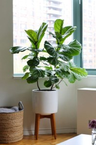 Affordable House Plants For Living Room Decoration 19