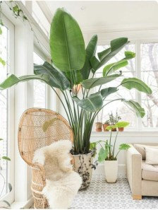 Affordable House Plants For Living Room Decoration 20