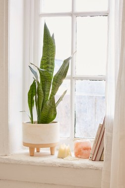 Affordable House Plants For Living Room Decoration 25