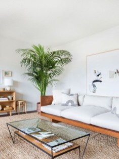 Affordable House Plants For Living Room Decoration 28