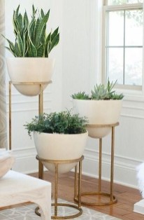 Affordable House Plants For Living Room Decoration 30