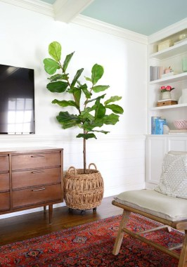 Affordable House Plants For Living Room Decoration 36