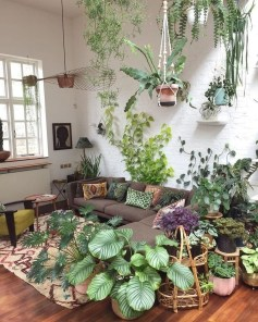 Affordable House Plants For Living Room Decoration 37