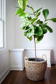 Affordable House Plants For Living Room Decoration 38