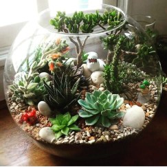 Awesome Succulent Garden Ideas In Your Backyard 39