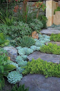 Awesome Succulent Garden Ideas In Your Backyard 44