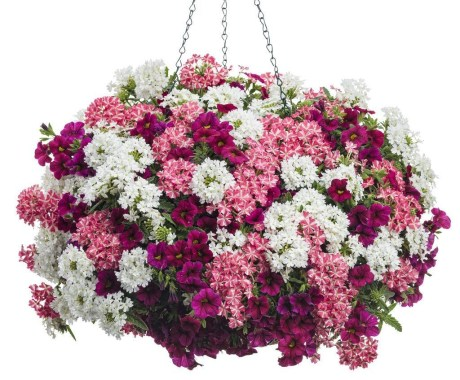 Lovely Hanging Flower To Beautify Your Small Garden In Summer 07