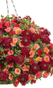 Lovely Hanging Flower To Beautify Your Small Garden In Summer 09
