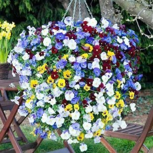 Lovely Hanging Flower To Beautify Your Small Garden In Summer 12