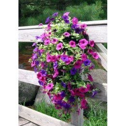 Lovely Hanging Flower To Beautify Your Small Garden In Summer 42