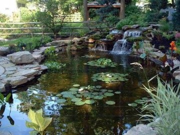 Adorable Fish Ponds Inspirations For Your Home 17