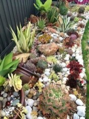 Elegant Indoor Rock Garden Ideas That Can Enhance Your Home Style 27