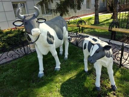 На сырзаводе вас встретят пятнистые коровки