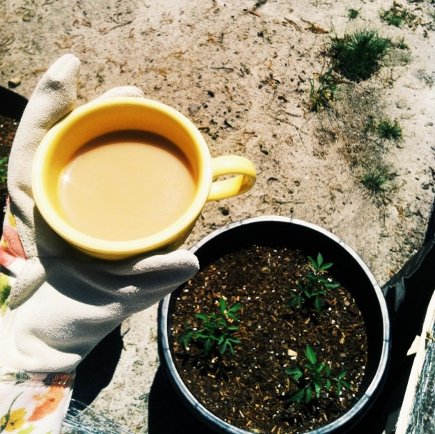 Gardening and coffee