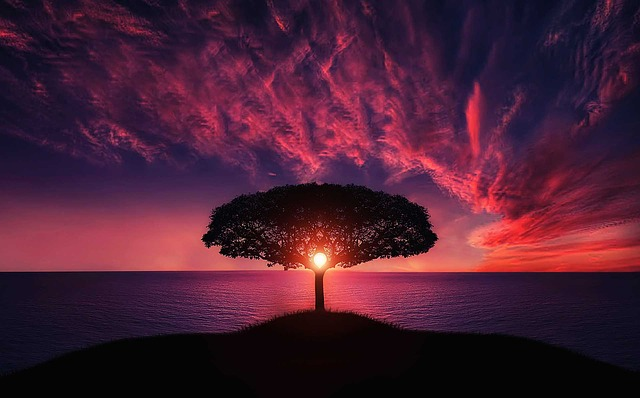 This image has an empty alt attribute; its file name is Tranquil-tree.jpg