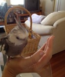 "This one is called ""A Bird in the Hand..."""