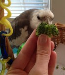 "The broccoli connoisseur demonstrates how to inhale the bouquet using the ""full beak immersion"" method."