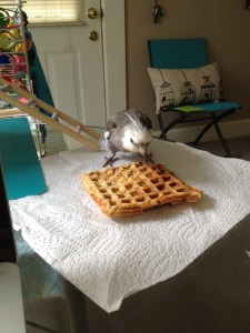 Once the proper preparation is confirmed, it is important to adopt the proper waffle-consumption stance.