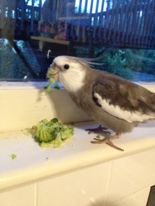 """Now I'll display my """"broccoli beak."""" Yup - she's putting the broccoli back in the frig (to save later for me since I like it so much). Whew."""