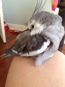 I'll just tuck my soft feathery head under one soft feathery wing.
