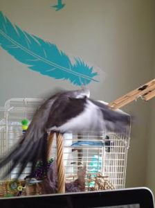 """Start with some """"warmup"""" flapping."""
