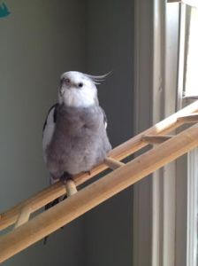 My I'm feeling fine and feathery today!
