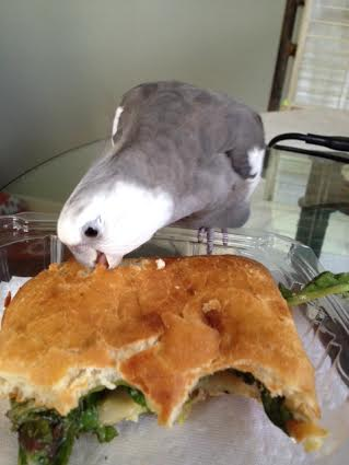 "He then administers his patented ""bite o' death,"" sealing the panini's fate."