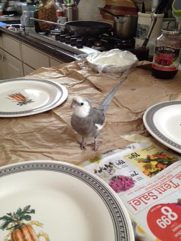 My keen avian intellect senses the preparation of delicacies.