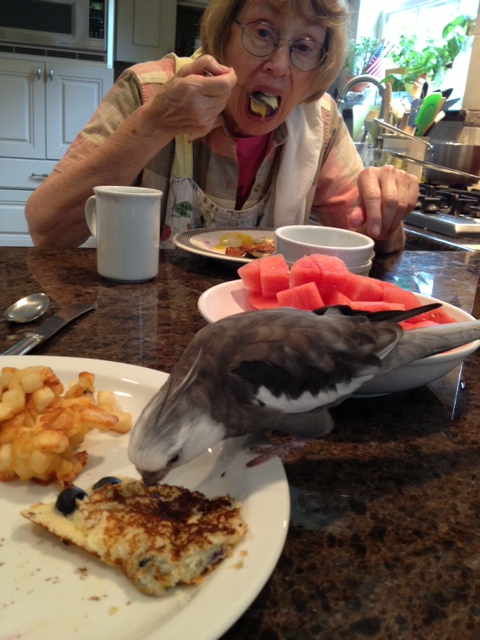 Eating those dishes is also great fun, since Grandma always lets the one with the feathers choose his plate first.