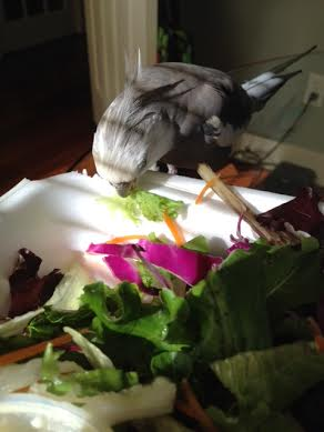 Don't worry green crunchy thing - you'll be safe in my beak.