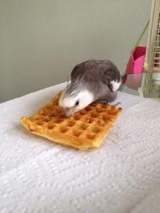 I was about to start singing my encore number, but it can wait. Waffles come first.