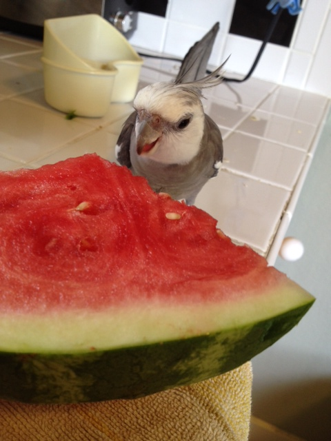 I'll just open my beak and prepare to dig in.