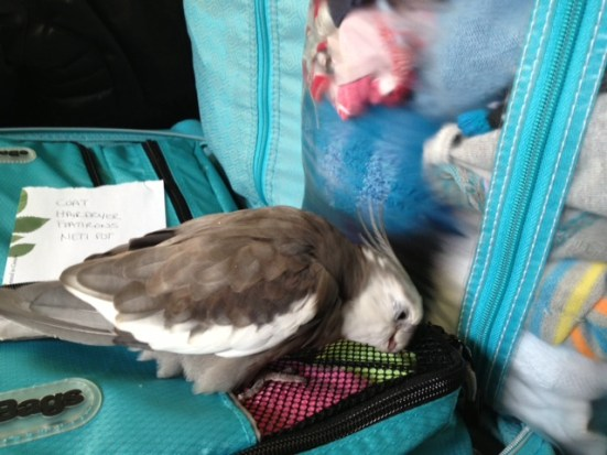 Pearl helps his mommy to pack for a trip.