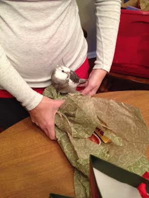 Pearl helps his Mommy wrap holiday gifts.