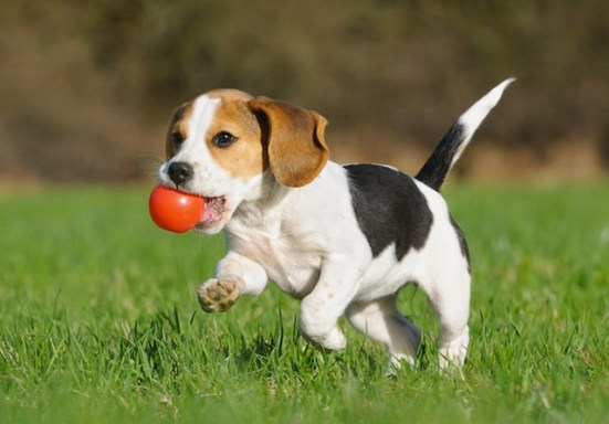 """A young furred being learns the proper (i.e. boring) way to play """"Go Fetch."""""""
