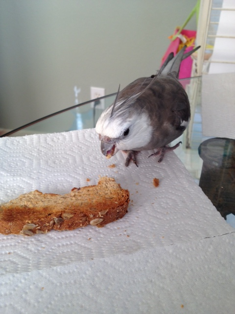 """""""Bond"""" pauses for a snack (chomping is hard work!)"""