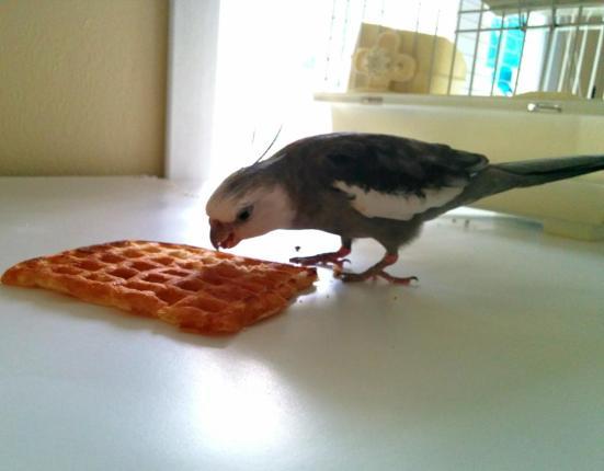 Waffle, fresh and lightly toasted - just the way I like it.