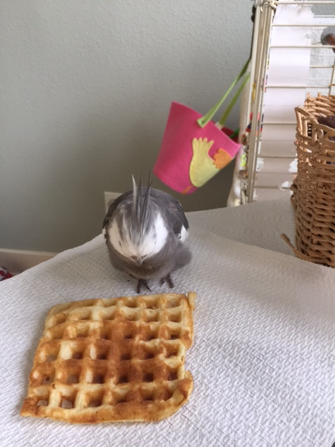 "Oh, well, hello! You must be my ""practice waffle."" Nice to meet you."