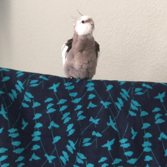 """Yes, Mom, I'm ready to begin the """"Alpha Preening  Modeling Shoot."""""""