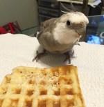 WaffleShare